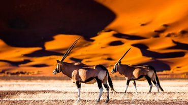 Sossusvlei Dunes Namibia