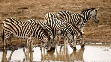Safari Journey of a life Time