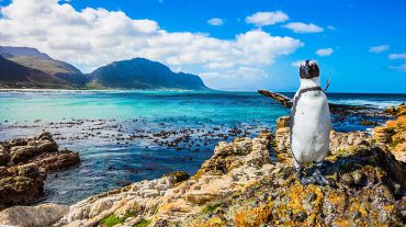 From the Bushveld <br>to the Ocean